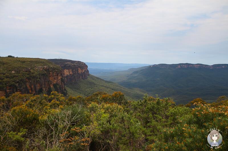 Aussicht vom Jamison Lookout auf ein weites, gruenes Gebirge und Tal