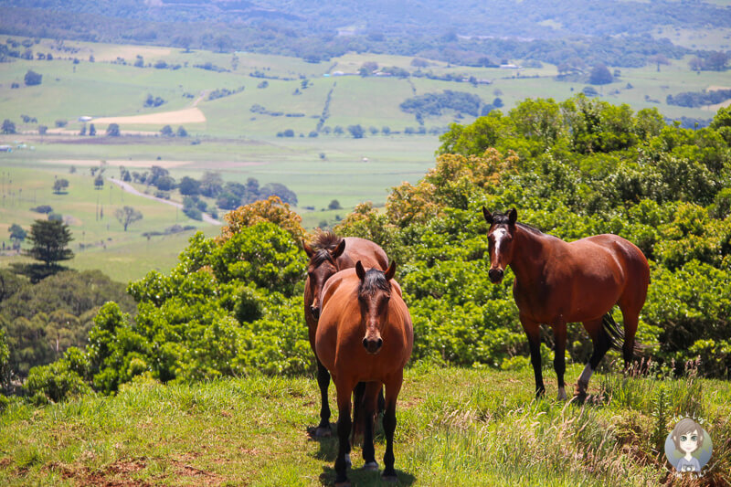 Pferde entlang der Saddleback Mt Road mit toller Aussicht