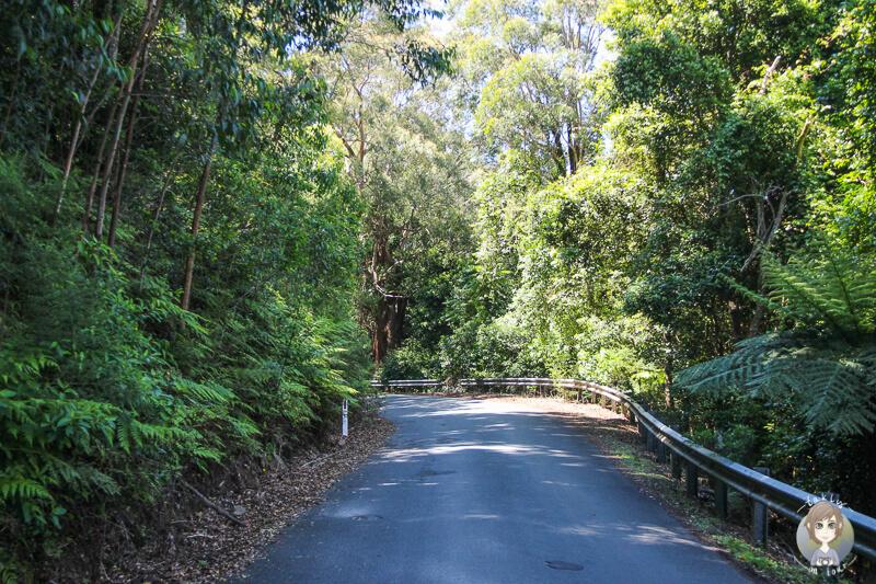 Richtung Cambewarra Mountain