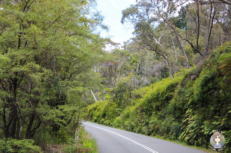 Cliff Drive im Blue Mountains National park