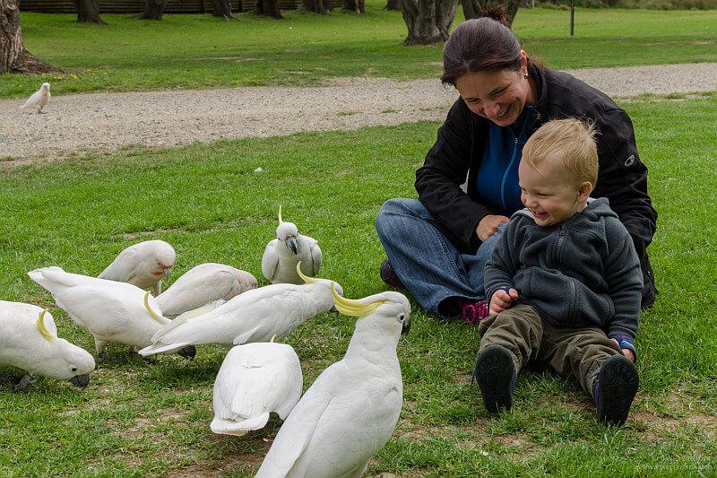 Auf der Elternzeit in Neuseeland mit ihrem Sohne bei den Kakadus