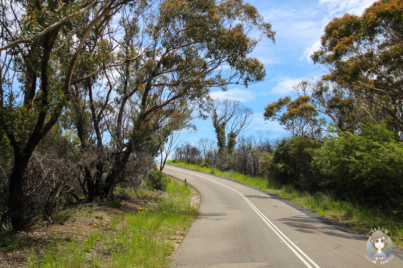 Fahrt Greater Blue Mountains Drive