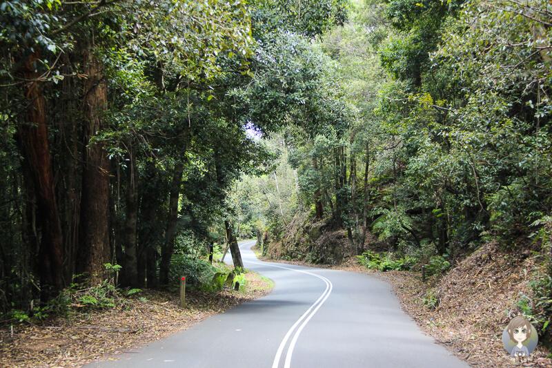 Fahrt Richtung Megalong Valley