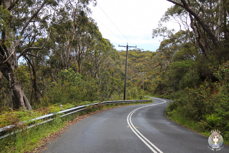 Bewaldete Strecke in das Megalong Valley New South Wales