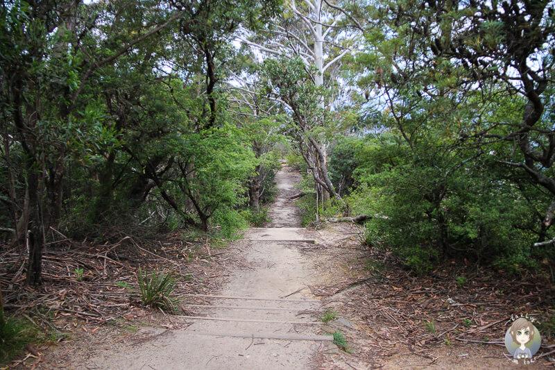 Weg zum Gordon Falls Lookout NSW