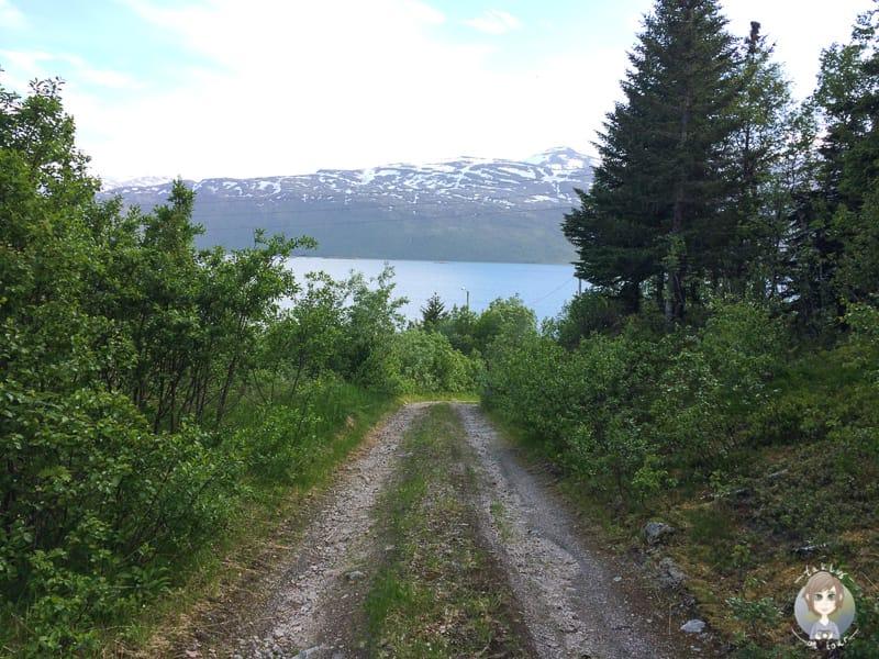 Ein Feldweg mit einer Kurve in Sicht