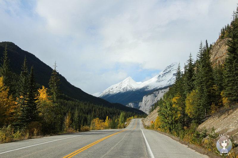 Der Icefields Parkway im Herbstkleid