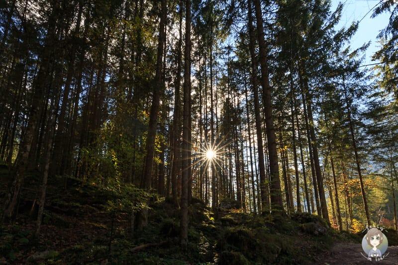 Die Sonnenstrahlen kämpfen sich durch die Bäume im Zauberwald