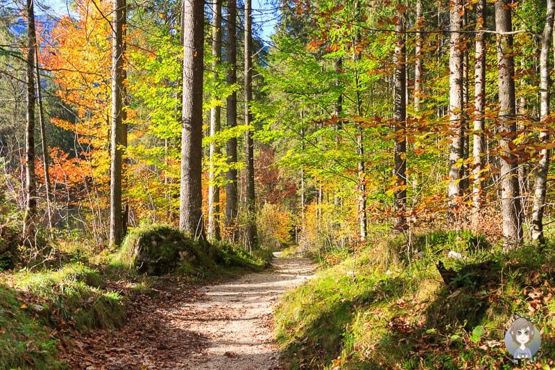 Herbstfarben im Zauberwald am Hintersee