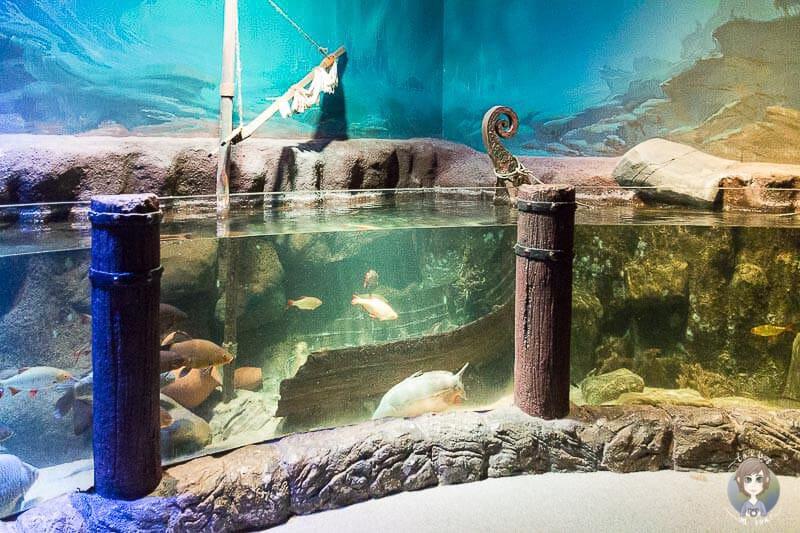 Anschauliche Wasserbecken Sea Life Koenigswinter