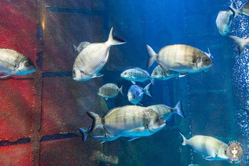Fische im Sea Life Koenigswinter