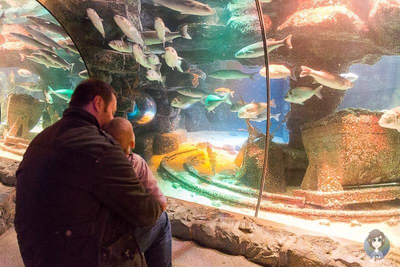Mit Kleinkind im Aquarium