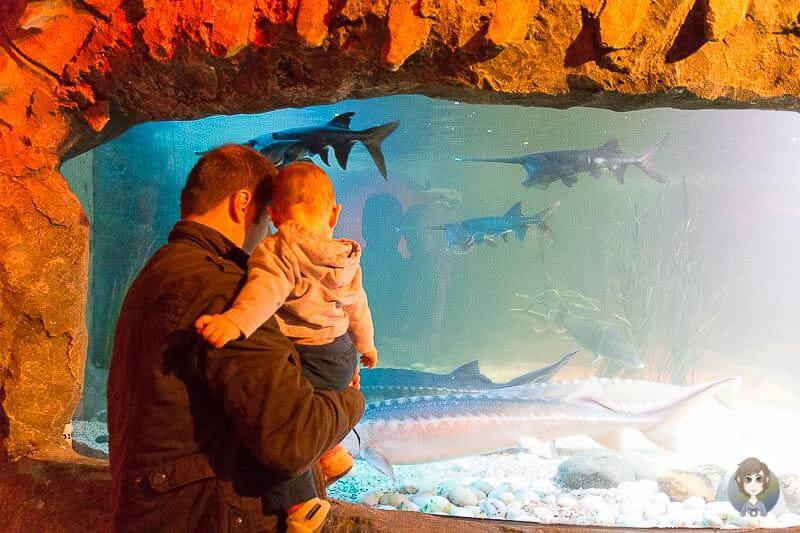 Mit Baby im SeaLife in Königswinter