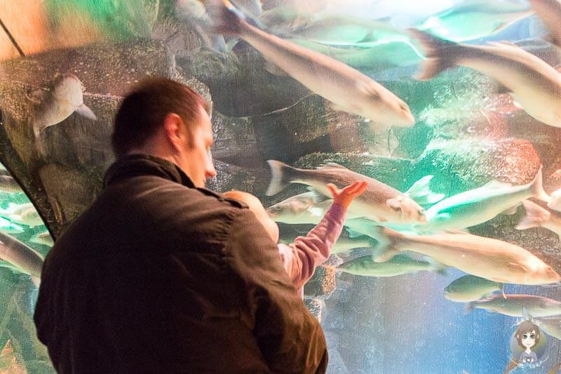 Begeisterung bei Kindern im Sea Life Koenigswinter