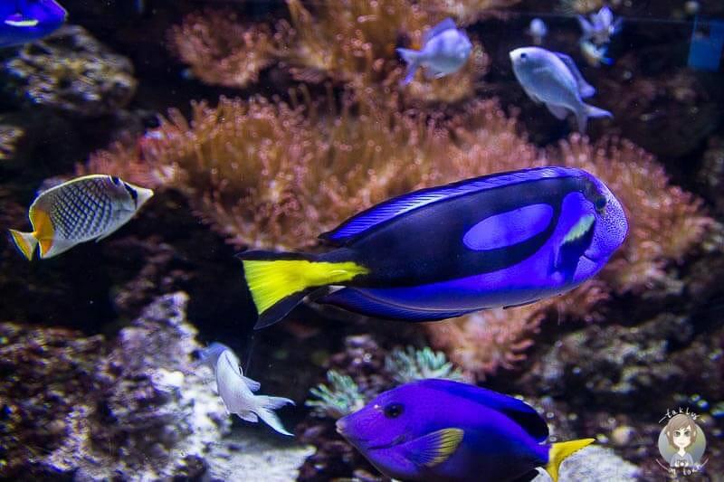 Bunte Fische im Sea Life