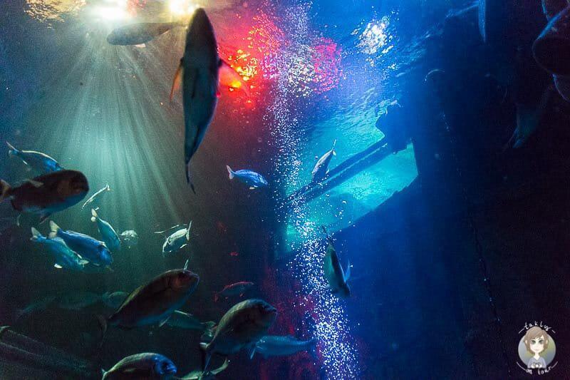 Fische und Haie im Sealife