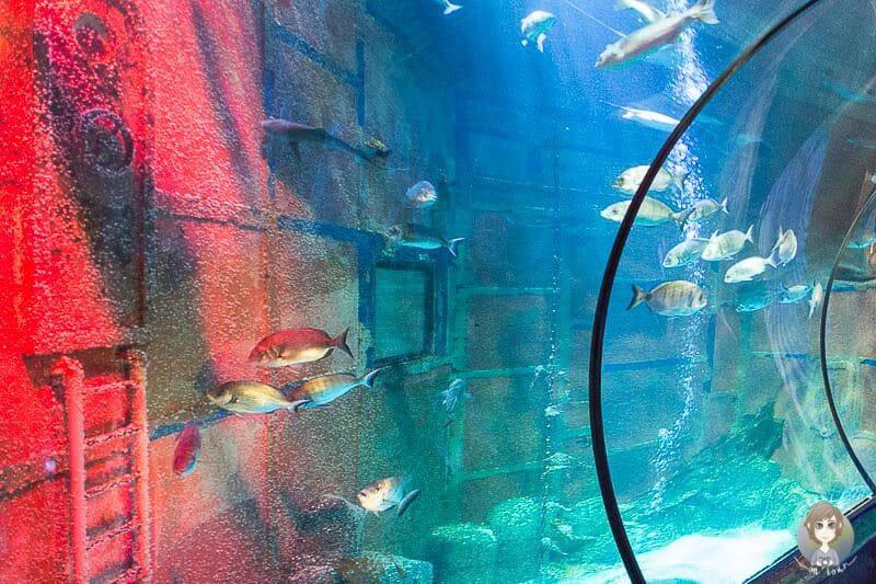 Fische im Wassertunnel vom Sea Life Königswinter