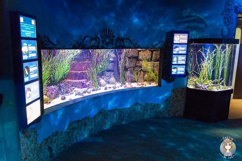 Zu Besuch im Sea Life Königswinter