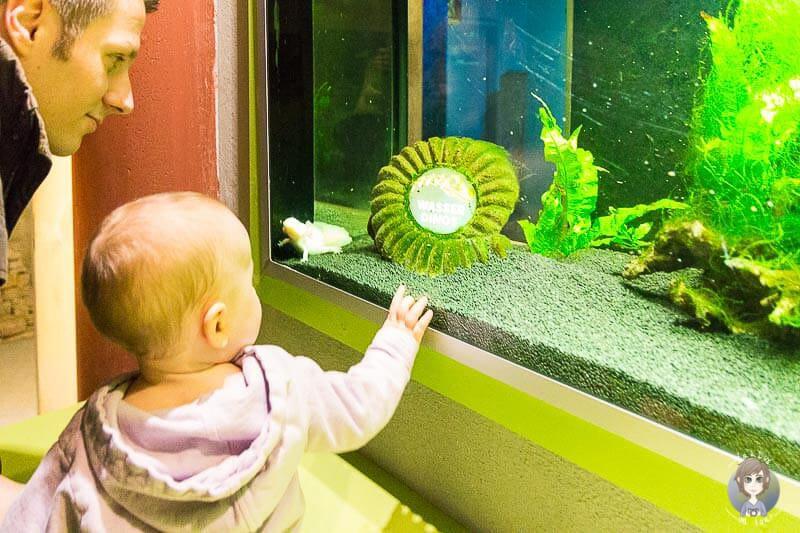 Im Sea Life Königswinter mit Kind