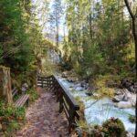 Zauberwald am Hintersee • Ein Paradies zum Wandern