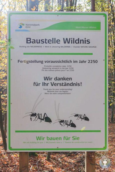 Baustelle Wildnis <i>Schild: ©Nationalpark Eifel</i>