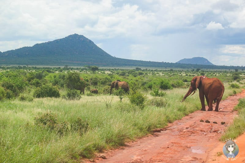 Elefanten im Tsavo West Nationalpark