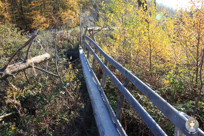 Der Kletterparcours führt teils über schmale Holzstege
