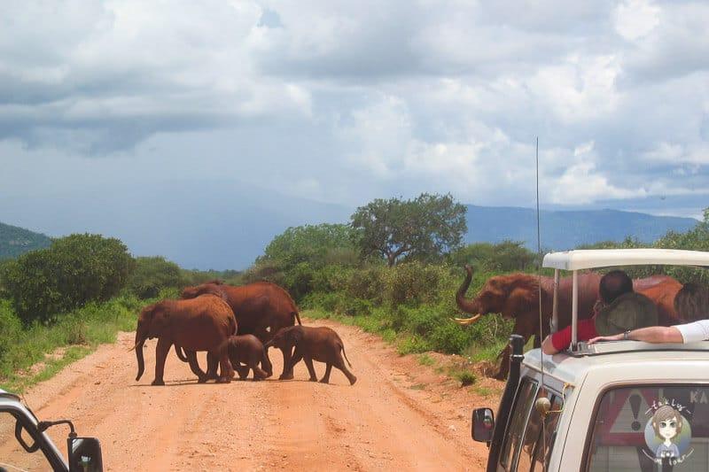 Eine Elefantenherde im Tsavo West