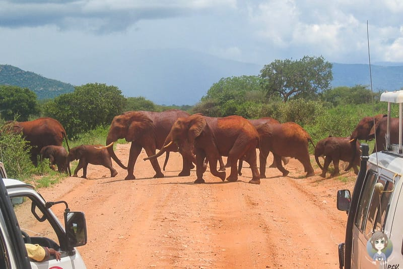 Eine Kenia Safari im Tsavo West National Park