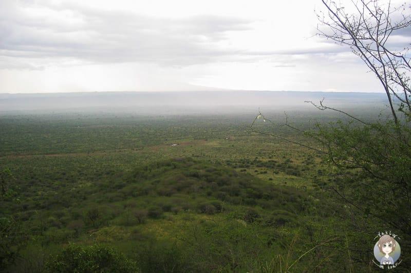 Blick über die Savanne im Tsavo Nationalpark in Kenia