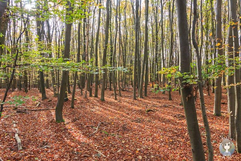 Tolle Herbstfarben auf der Wanderung über den Wilden Weg