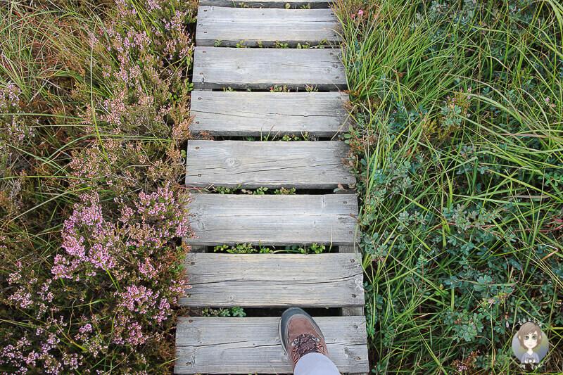 Wanderschuh auf einem Wanderweg mit Steg