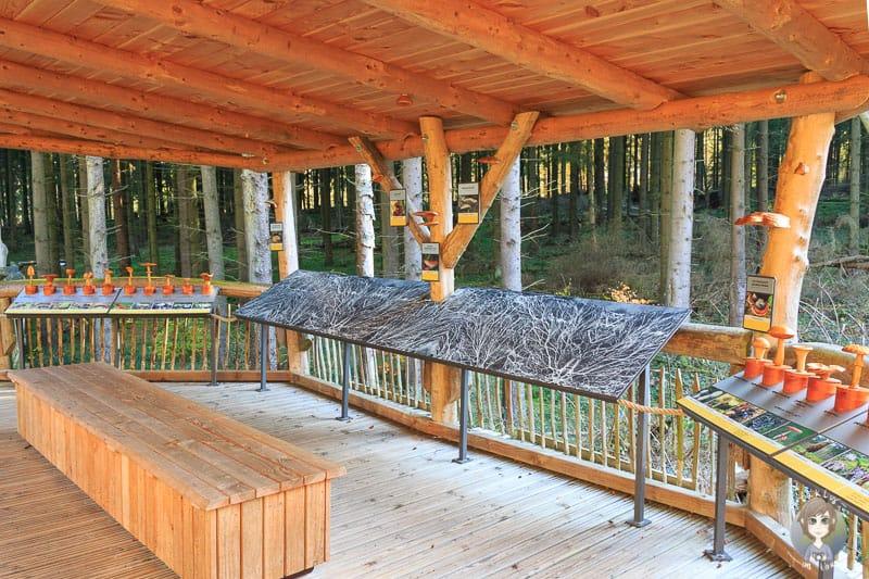 Das Ausflugsziel Eifel hat viel zu bieten, wie hier am Wilden Kermeter