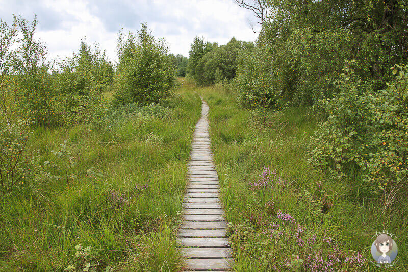 Wanderweg Plattes Venn im Naturpark Eifel