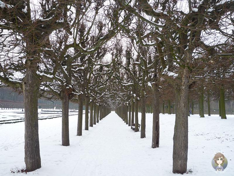 Eine Allee im Schlosspark Brühl