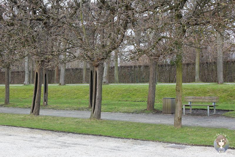 Bäume im Schlosspark Brühl