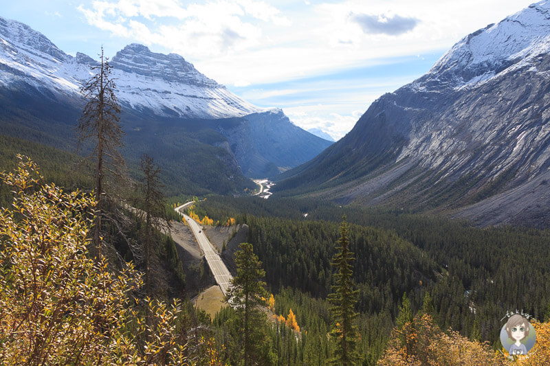 Die Postkartenperspektive vom Icefields Parkway am Big bend Viewpoint