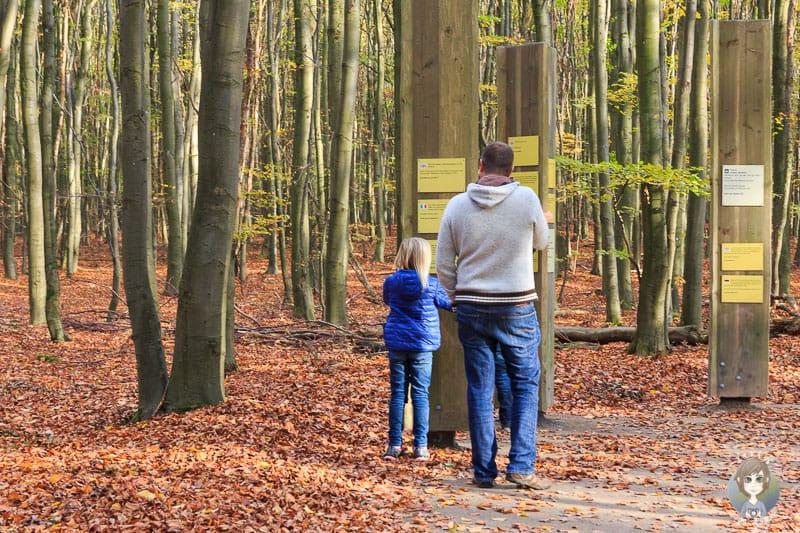 Immer wieder gibt es Informationstafeln auf dem Erlebnispfad Wilder Weg in der Eifel