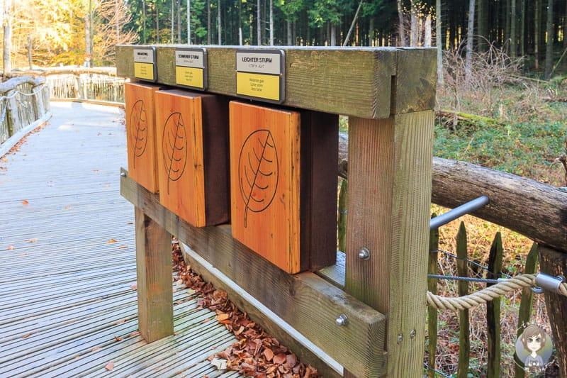 Der Wilde Weg ist ein interaktiver Natur - Erlebnispfad