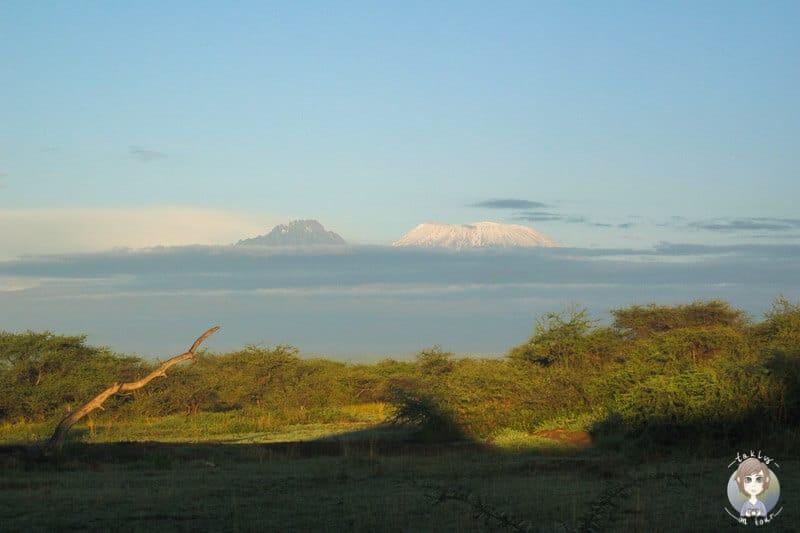 Toller Blick auf den Kilimandscharo am Morgen