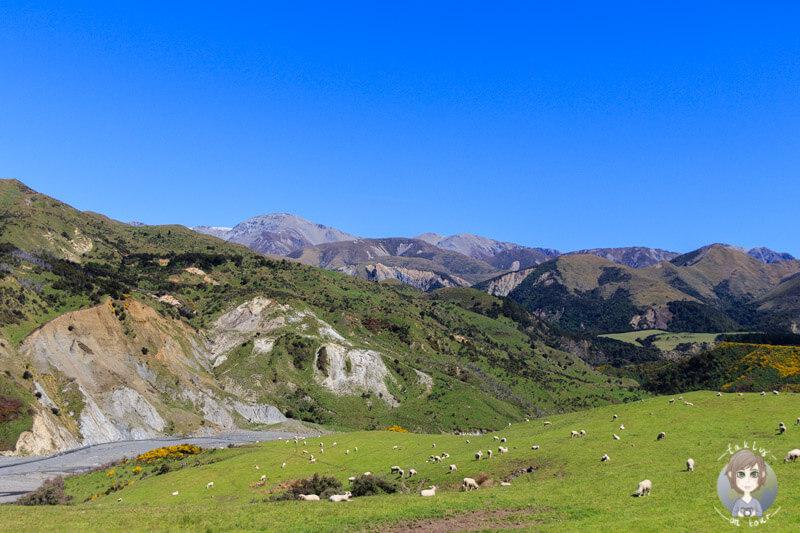 Neuseeland Reisen Uebersicht mit all unseren Berichten zum Thema