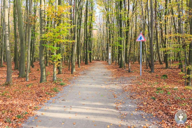 Der Barrierefreie Wanderweg durch den Wald vom Wilden Kermeter