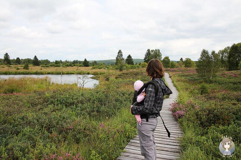Wandern mit Baby im Platten Venn in der Eifel