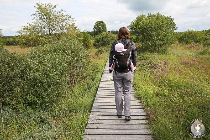 Wandern mit Baby im Platten Venn, Monschau Mützenich