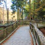 Der Erlebnispfad Wilder Weg im Nationalpark Eifel