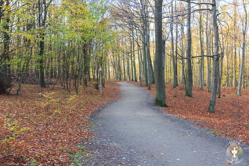 Herbstlicher Spaziergang durch den Wald am wilden Kermeter