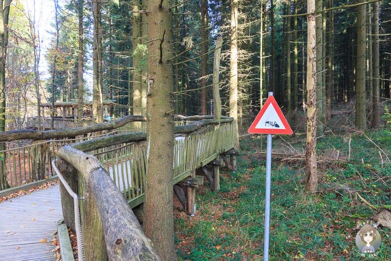 Start unserer Wanderung am Kermeter in der Eifel