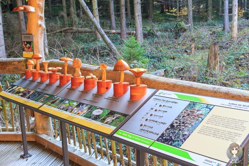 Flora und Fauna werden am Wilden Kermeter in der Eifel erklärt