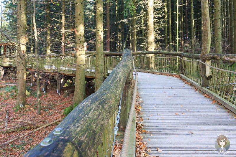Der wilde Weg in der Eifel ist barrierefrei