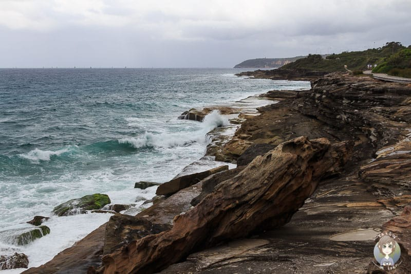 Hohe Wellen an den Klippen südlich des South Curl Curl Beach in Australien